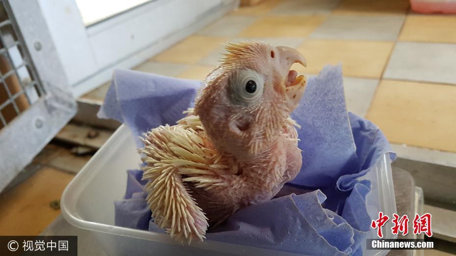 英动物园出生首只凤头鹦鹉 比大熊猫还珍贵 - 周公乐 - xinhua8848 的博客