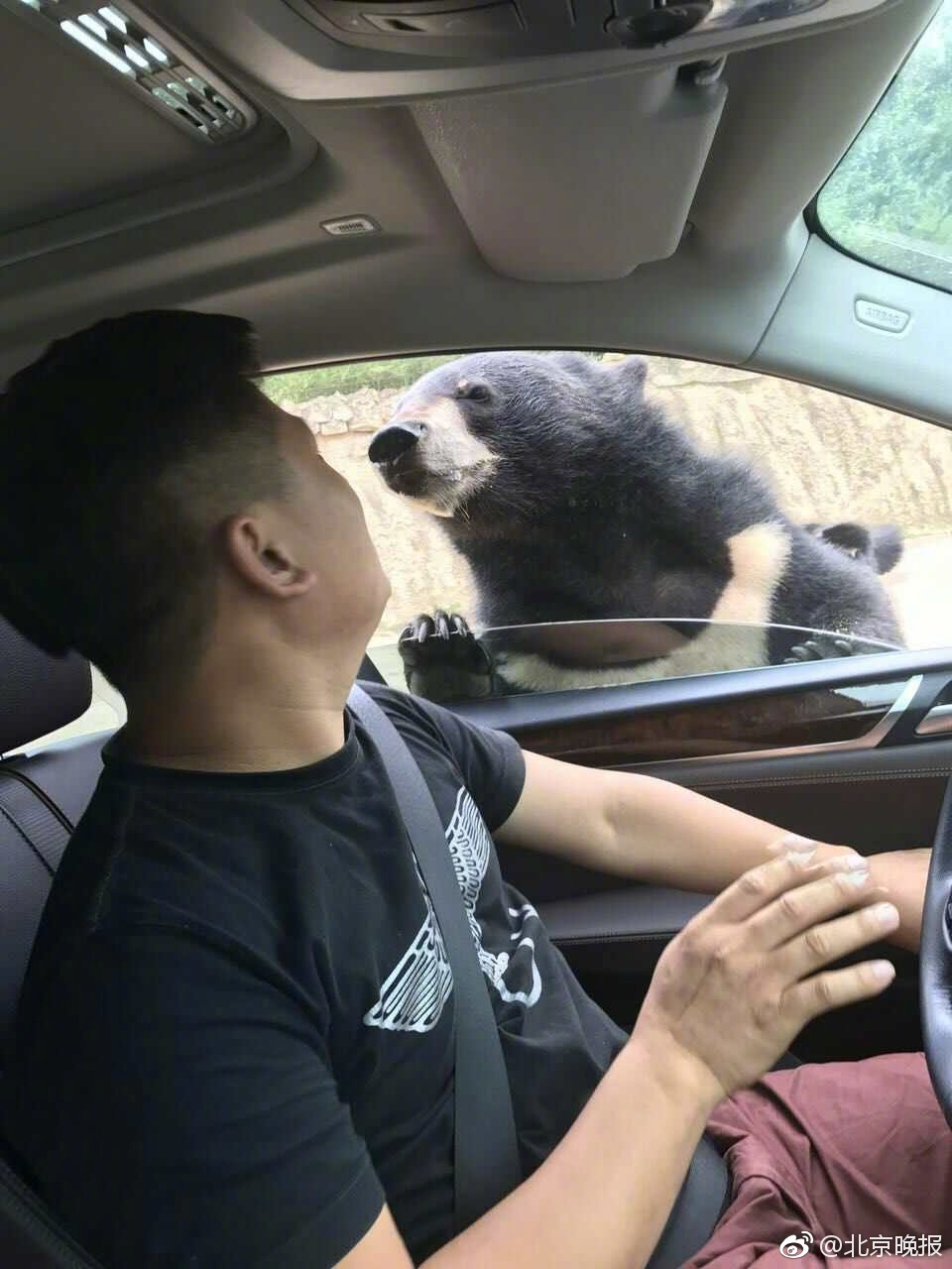 八达岭动物园一游客