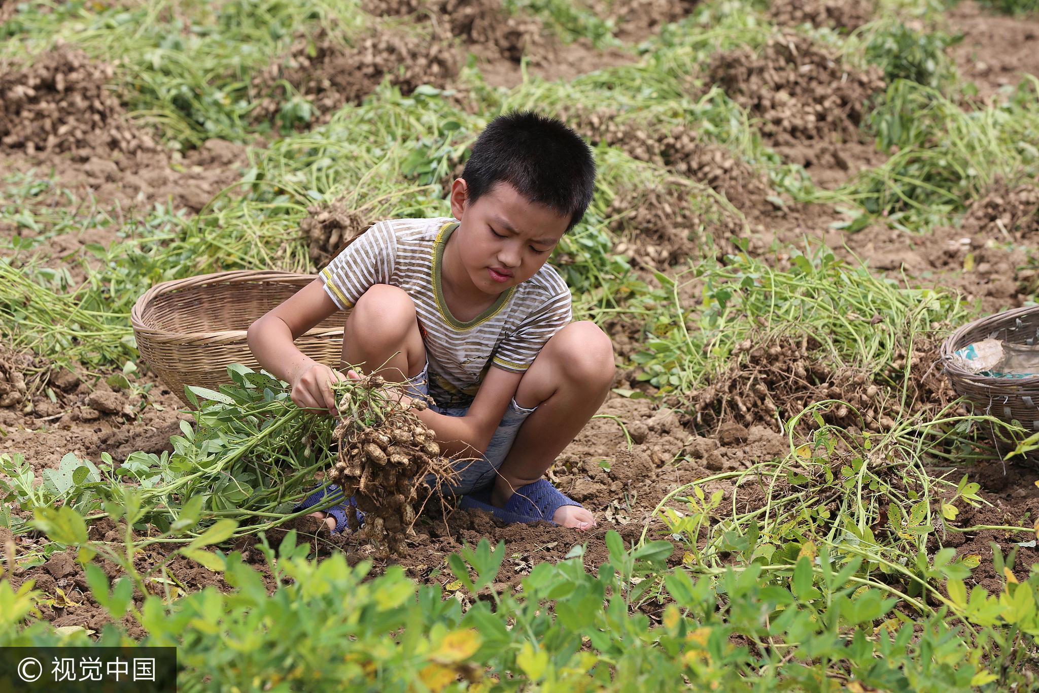 泪奔!父母重病 10岁男孩祈求留一个行吗 - 周公乐 - xinhua8848 的博客