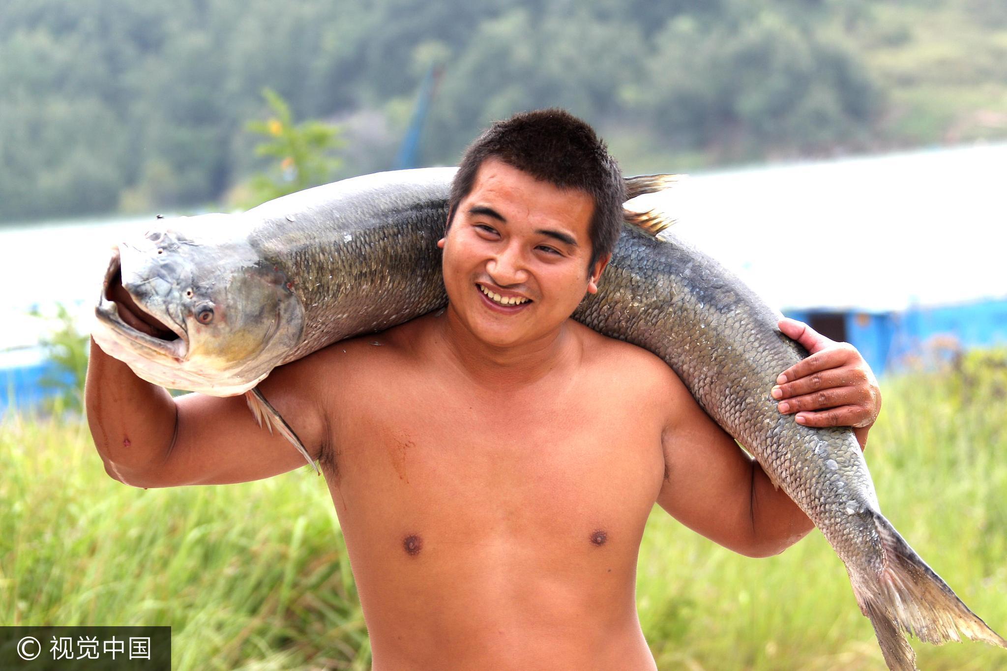河南捕鱼者布阵捉鱼王 鱼和人一样高 - 周公乐 - xinhua8848 的博客