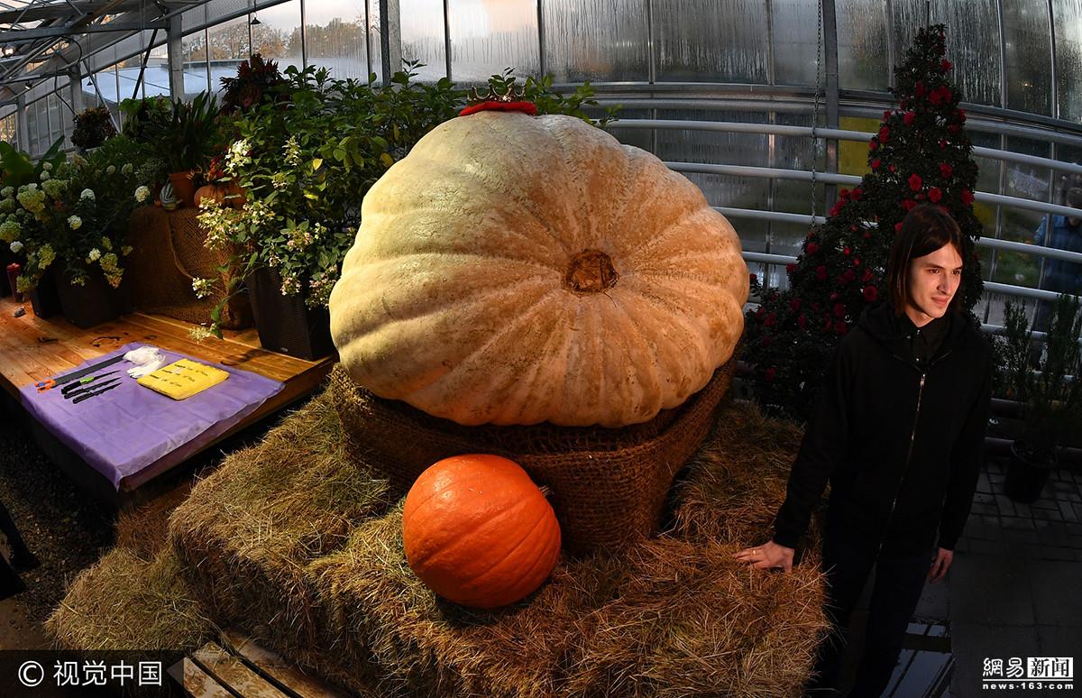 俄心理学家种出全俄最大南瓜 重达432公斤 - 周公乐 - xinhua8848 的博客