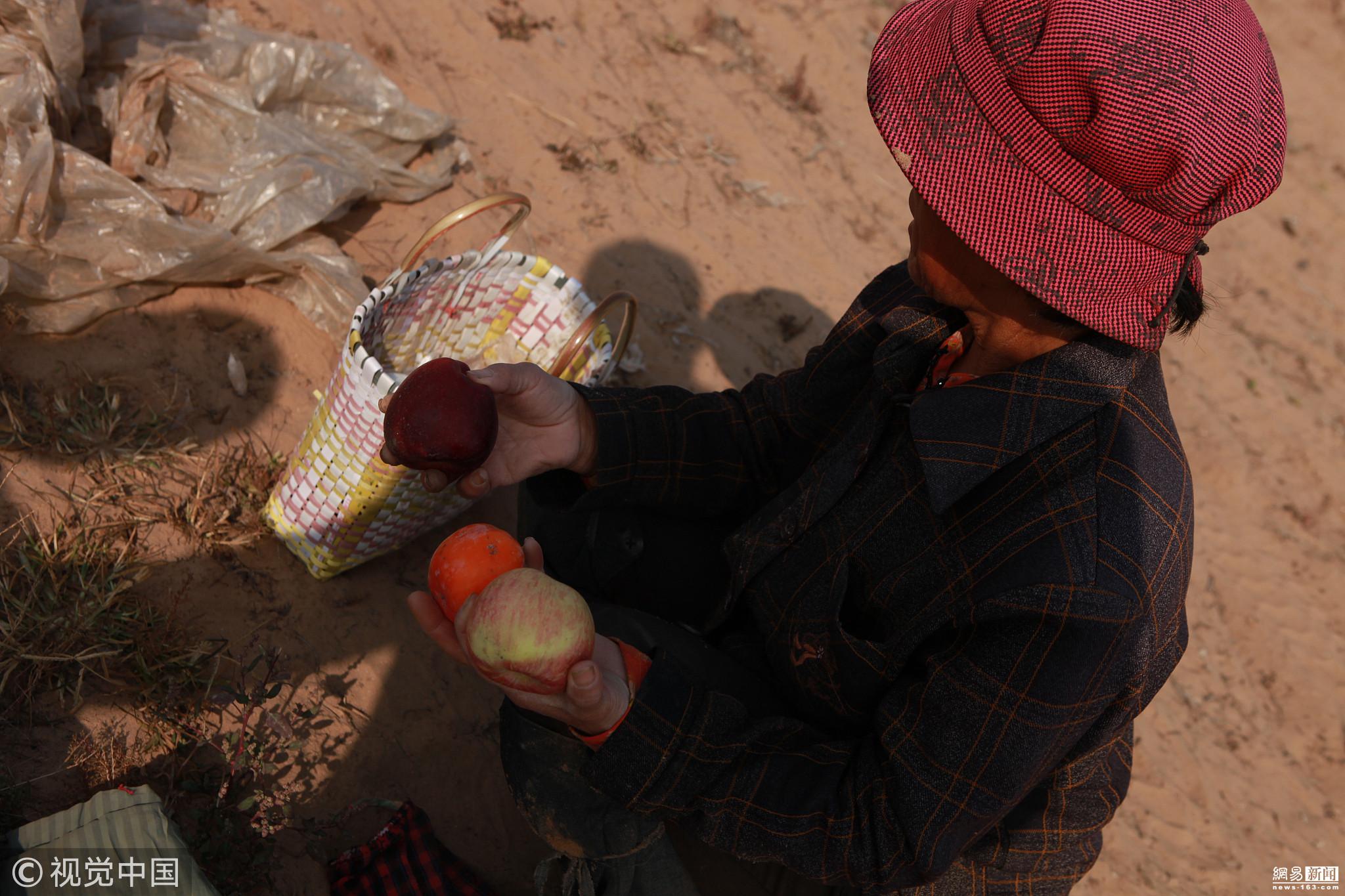 六旬大妈卖苦力挖山药 日收入仅100元 - 周公乐 - xinhua8848 的博客
