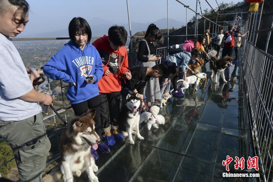 """湖南平江举办玻璃桥""""单身狗""""相亲会 !!! - 周公乐 - xinhua8848 的博客"""