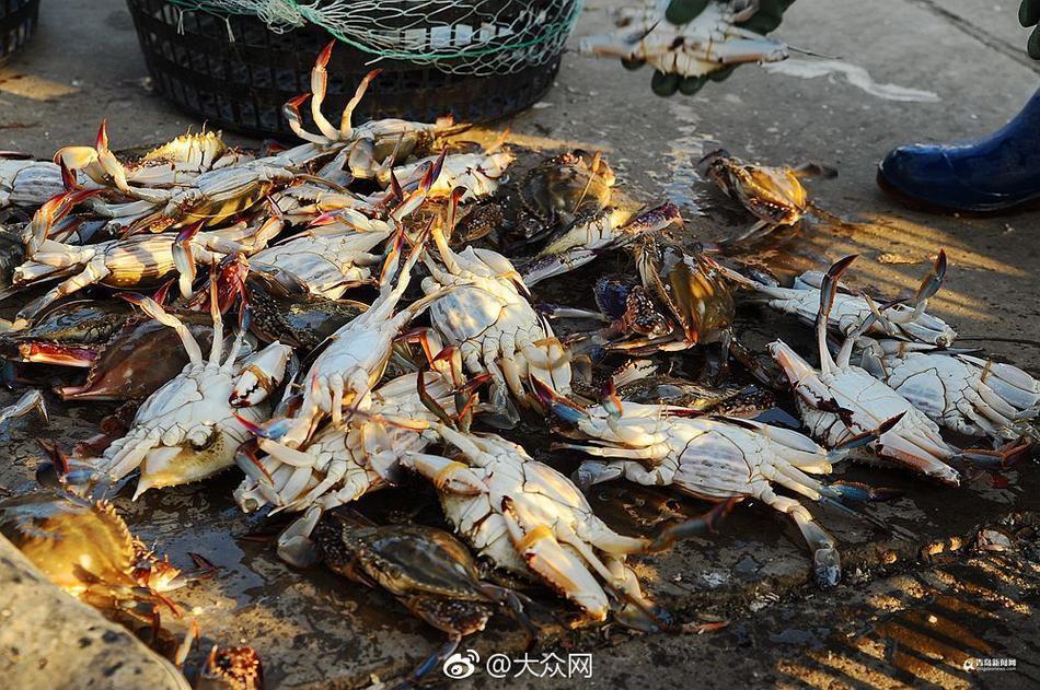 秋末冬初海捕梭蟹丰收 大个母蟹百元一斤!!! - 【医药前沿】的网易博客