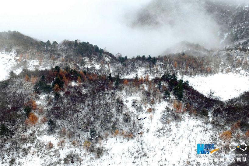 重庆迎今冬浪漫初雪 雪花笼盖四野 - 周公乐 - xinhua8848 的博客