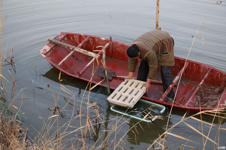 村民池塘捞出50斤太岁 专家估价超100万!!! - 周公乐 - xinhua8848 的博客