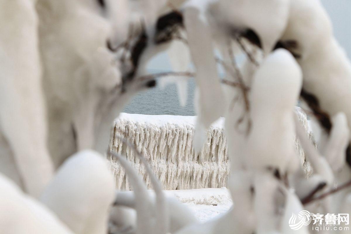 威海现冰凌景观 海水结冰似南极 - 周公乐 - xinhua8848 的博客