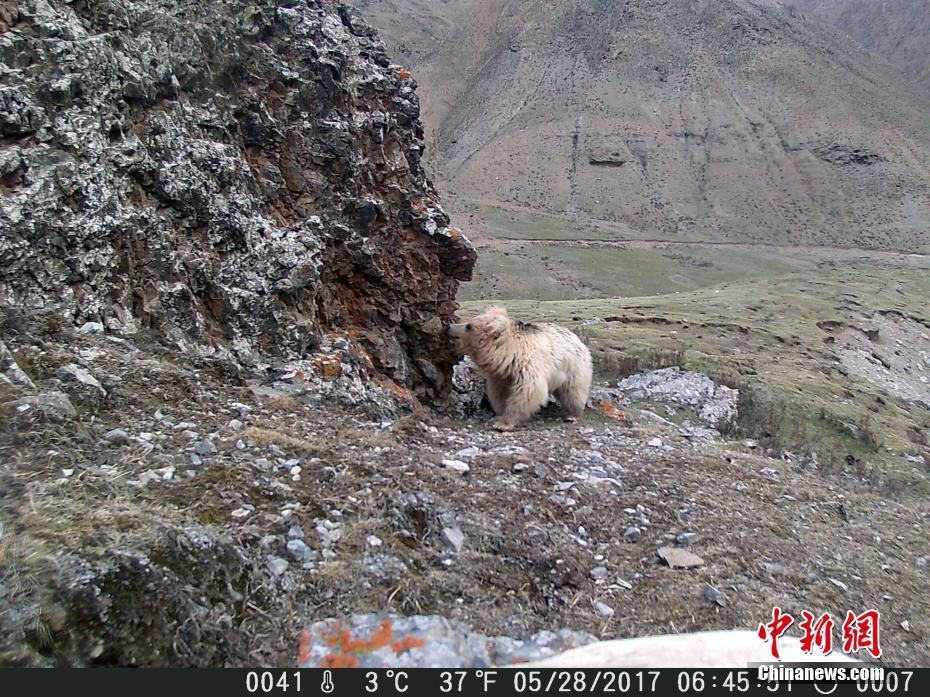 见没见过  祁连山的野生动物 - 长天秋水2 - 长天秋水 的博客