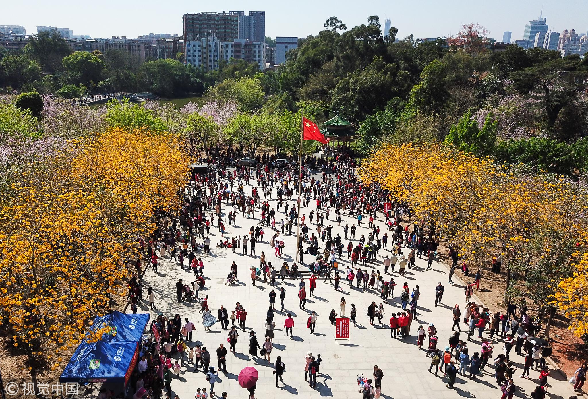 晴天加周末 超10万人涌入华南农业大学赏花!!! - 周公乐 - xinhua8848 的博客