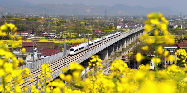 陕西汉中油菜花竞相开放 高铁列车穿行其中