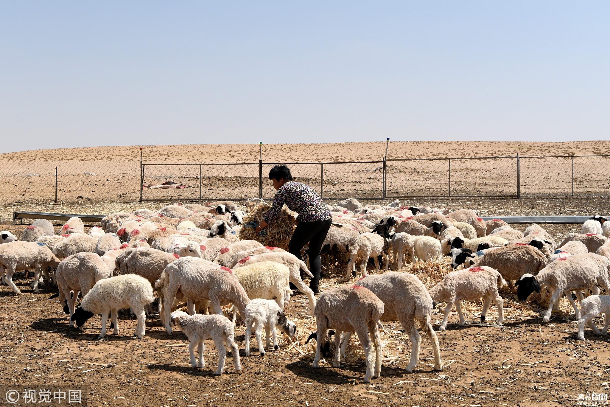乌拉特草原现重大旱情 降水量近20年最低 ! - 周公乐 - xinhua8848 的博客