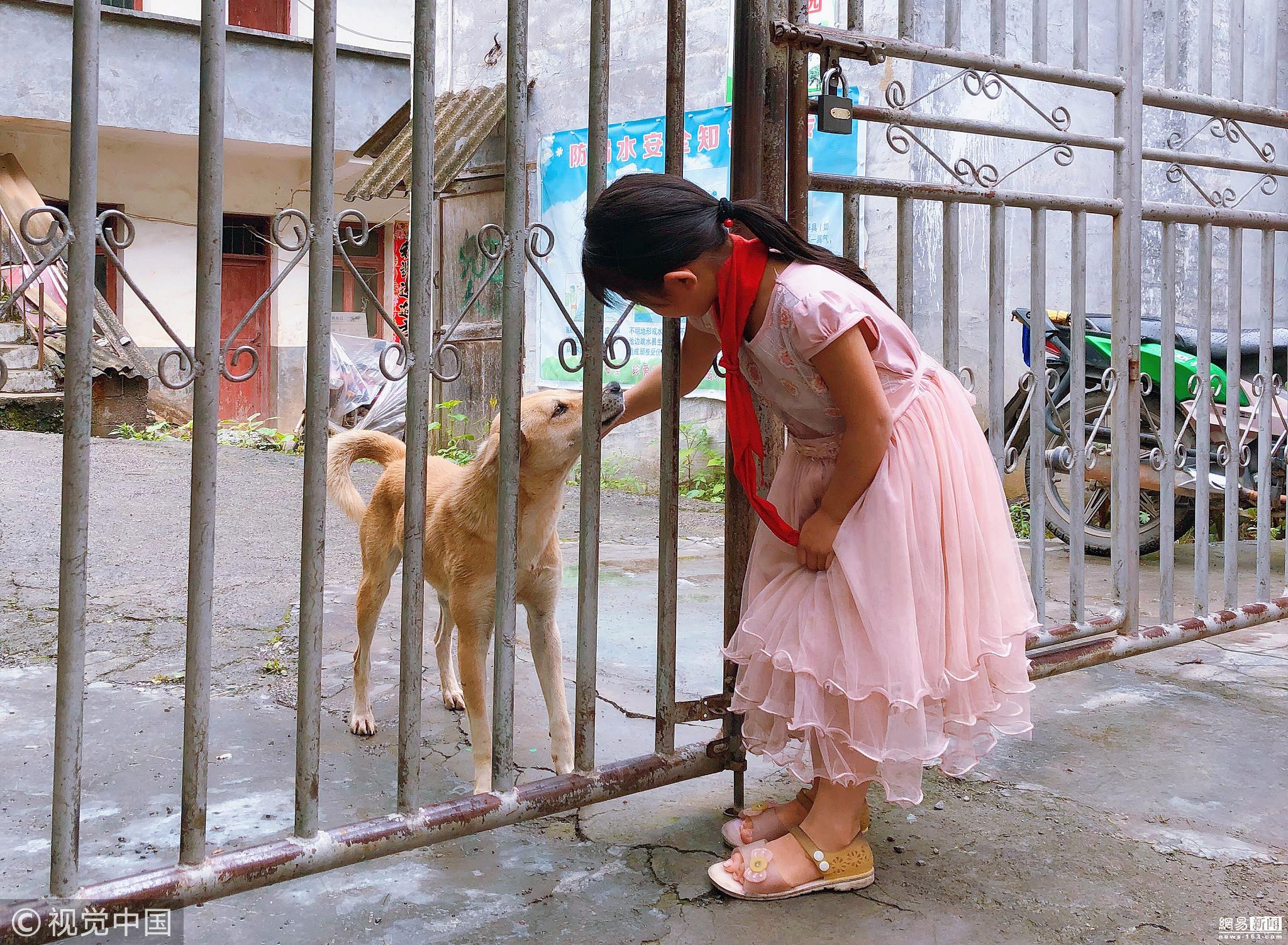 现实版忠犬八公 小黄狗每天接姐妹放学!!! - 周公乐 - xinhua8848 的博客