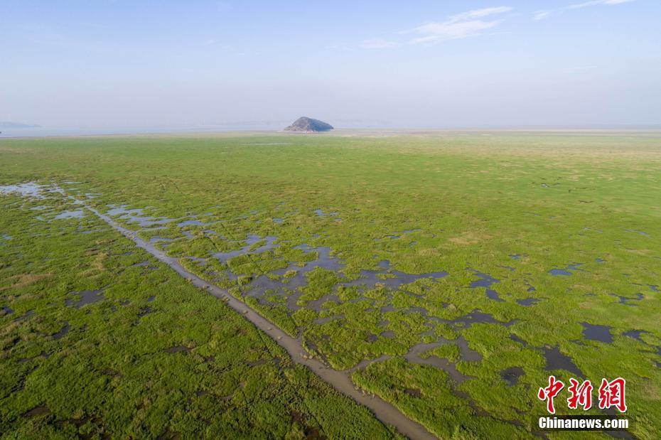 鄱阳湖提前进入枯水期 湖心滩涂显露 - 周公乐 - xinhua8848 的博客