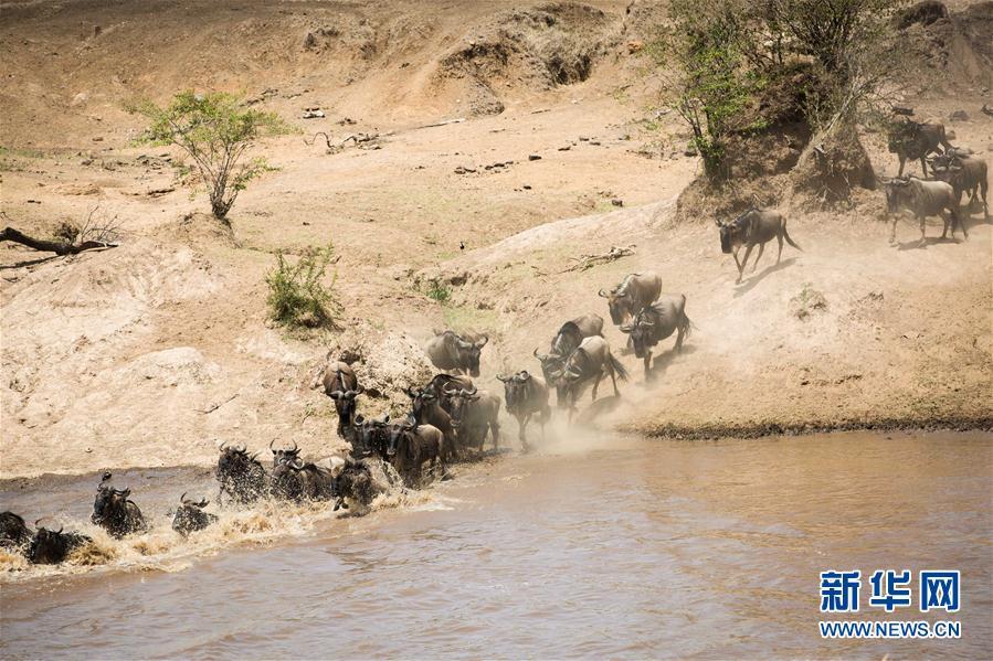 走进肯尼亚马赛马拉国家保护区