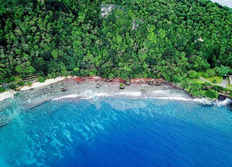 壮观!澳圣诞岛百万小红蟹大军迁向丛林