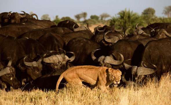非洲沙漠三角洲 遗世之美