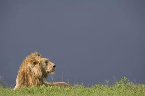 野性非洲 藏着不为人知的美丽