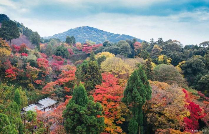 2018红叶前线!全日本最硬核的赏枫点在哪?