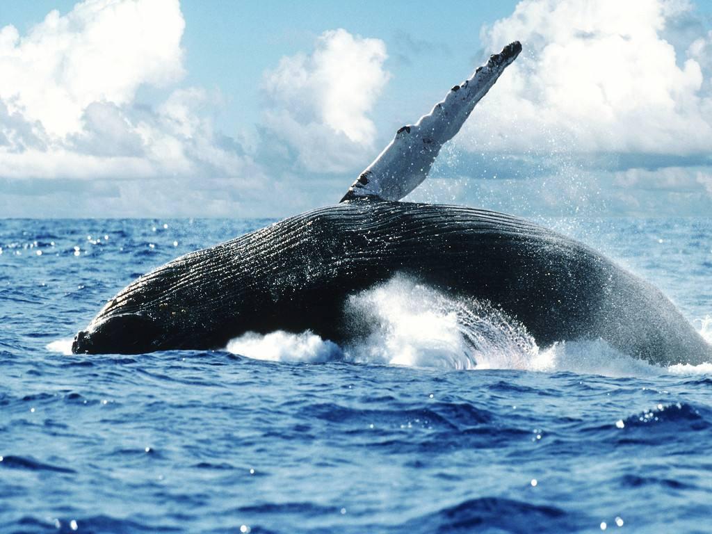盘点世界十大观鲸胜地 感受鲸鱼跃身击浪