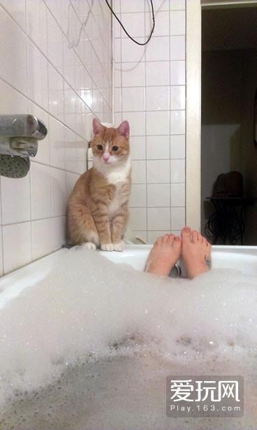 为何猫喜欢看人洗澡:4