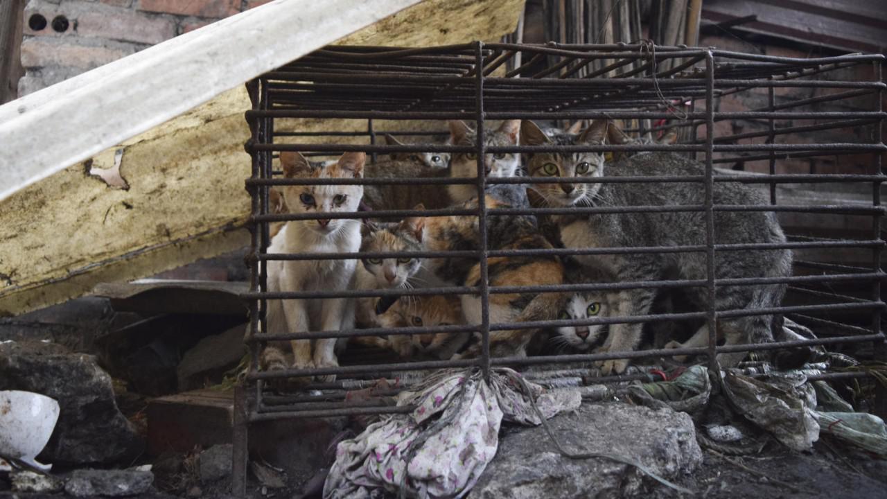 《辐射76》吃猫太残忍?越南人民不这么看