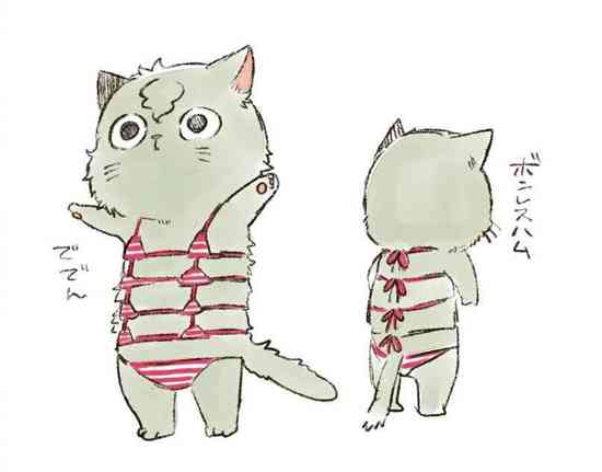 猫咪比基尼……猝不及防的笑点!