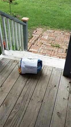 美国一网友家的猫被邻居家的猫搞怀孕了,然后一天早上起来,在家门口看到邻居送来这个。。。 ?